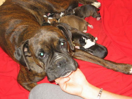 Mom_and_litter